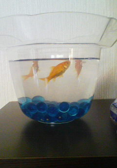 お祭りの金魚