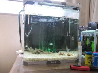 海水魚水槽